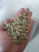 Northern Thailand Arabica Coffee Bean Premium