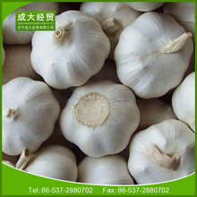 china cheapest fresh garlic best quality