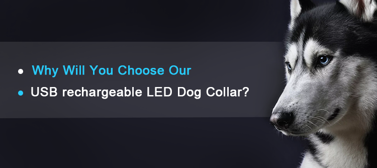 glowing USB Rechargeable LED pet dog collar for night safety