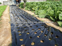 Hot sales LDPE black plastic mulch punch hole on agriculture