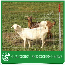 China manufacturer galvanized rabbit wire fence/ rabbit guard fencing