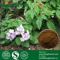 Bodybuilding Supplements Epimedium Leaf Extract