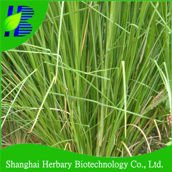 Vetiver grass with tolerance to barren soil