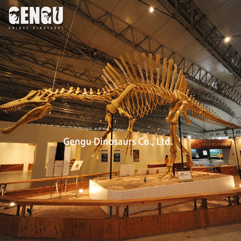 Museum Display Fiberglass Dinosaur Skeleton Replicas