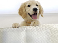 Free Sample Disposable Comfort Dog Sleeping Pad For Pet