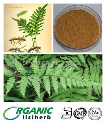 100% Natural Polypodium Leucotomos extract powder/Polypodium Leucotomos P.E.