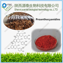 factory supply 100% Natural Vitis vinifera extract, Grape seed extract 95%, Proanthocyanidins, OPC