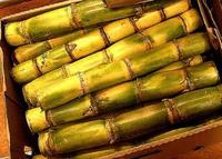 Fresh Sugar Cane Sticks for Juice