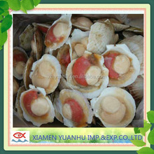 frozen scallop in half shell roe on