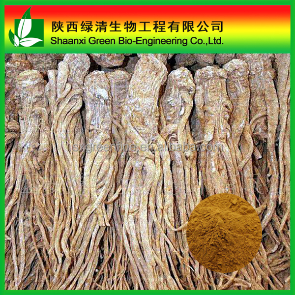100% Natural Chinese Angelica Extrat (EAS)1% Ligustilide