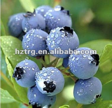Proventing diabetes:Bilberry Plant Extract Powder