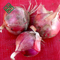 lowest price of fresh red onion