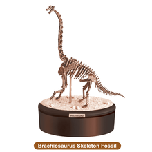 High Quality Animal Hobby Toy Dinosaur Skeleton for Decoration