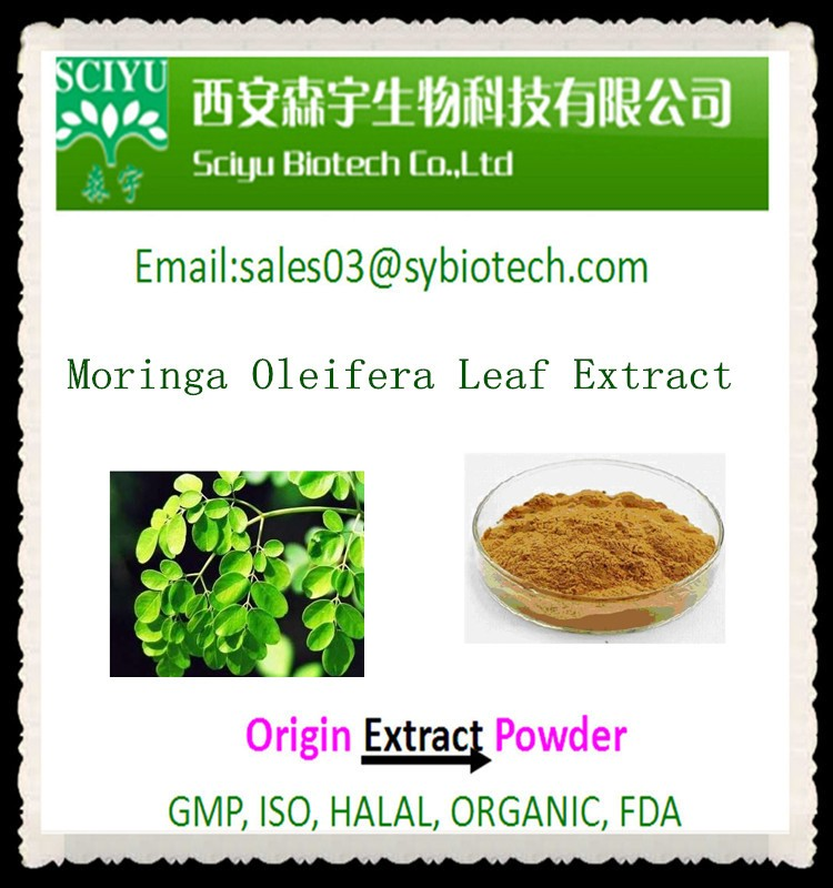 100% Natural Moringa Oleifera Leaf Extract 5:1 10:1 20:1