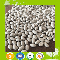 High quality Desiccant Masterbatch /plastic moisture absorbing master batch