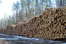 Timber Log / Sawlogs / Wood round logs / LARCH/BIRCH/SPRUCE/PINE READY FOR EXPORT FROM FAR EAST RUSSIAN PORTS