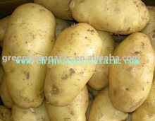 2011 A Grade Yellow Holland Potatoes--Best Price