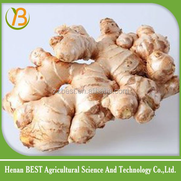 in China vegetable market ginger production
