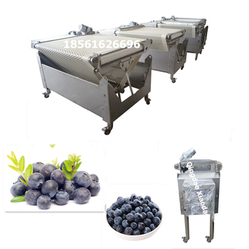 Automatic blueberry sorting and grading machine / blueberry sorting machine