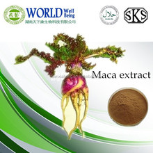 Medicine for long time sex maca extract powder/ 4:1 maca extract powder bulk