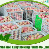 Chinese fuji apple/fresh apple fruit specification/apple price