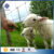 Factory Price Glavanized sheep and goat agricultural animal farm fence