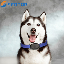 Auto Tracking GPS Dog with Collar and SIM Card Slot Smart Tracker