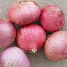 bulk cheap price fresh red onion