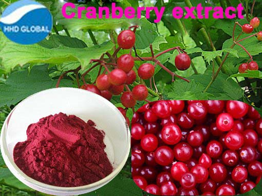 Hot selling high quality 100% Natural cranberry extract Proanthocyanidins with reasonable price !!!