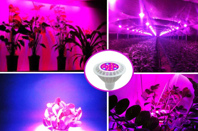 CE light led lamp shenzhen factory directly price led plant grow light