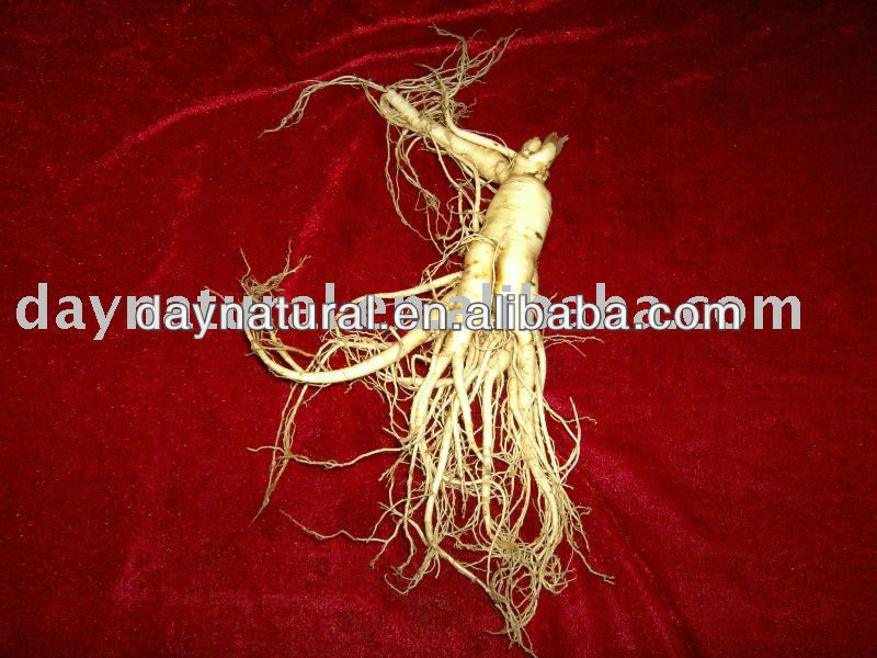 Natural Ginseng Extract for Ginseng Wine