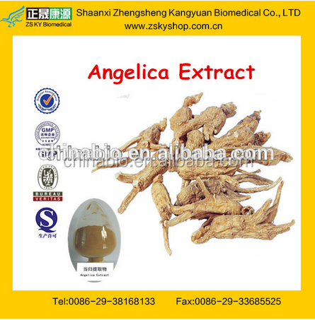 GMP Factory Supply High Quality Angelica Sinensis Extract