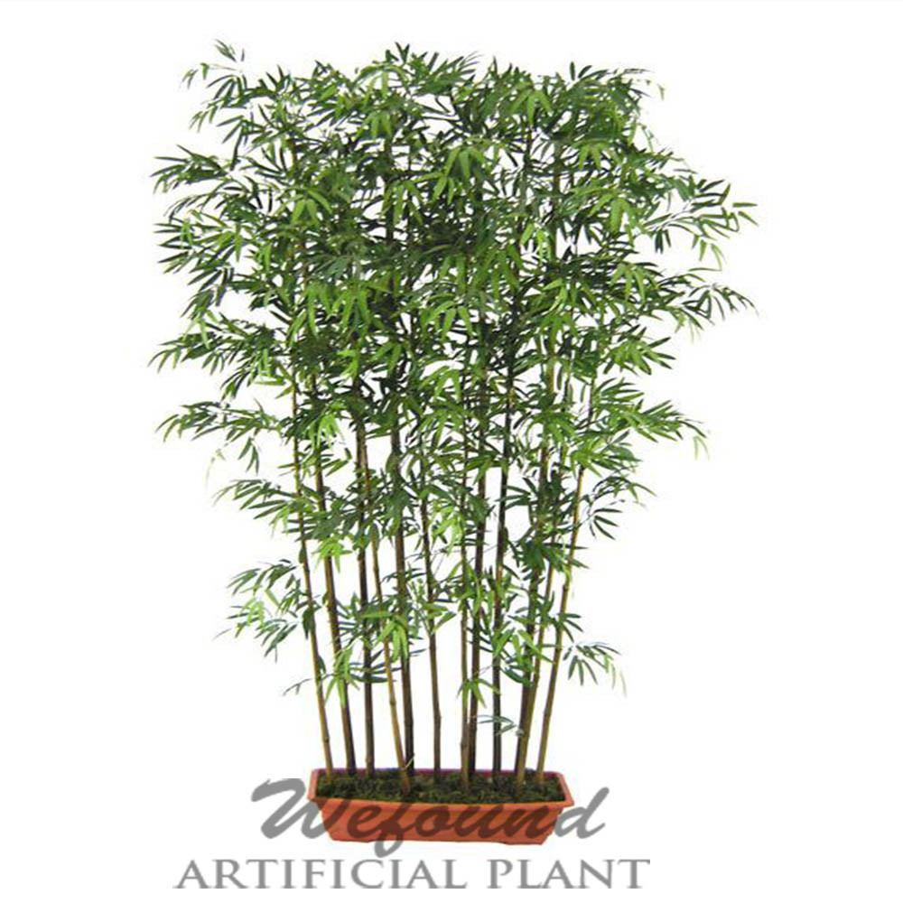 Outdoor Stand Fan Palm : Wf japanese bamboo with black stem potted plant