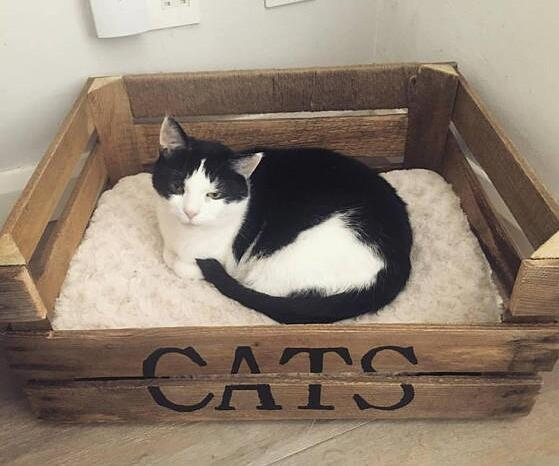 Wooden Crate Cat Bed - small pet crate - Personalised