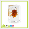 Hot Sales Real Acrylic Resin Bugs