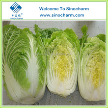 Export Fresh Chinese Cabbage with Good Price