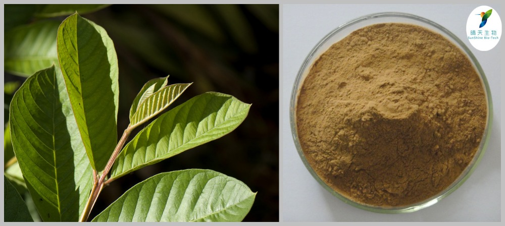 guava leaves extract Healing and cytotoxic effects of psidium guajava (myrtaceae) leaf extracts   keywords: psidium guajava, wound healing, cell culture, guava leaves,  cytotoxicity.