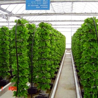 Agricultural Vertical Farming Hydroponic Commercial System