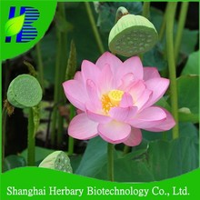 Big flower water lily seed for planting