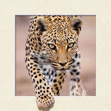 Fresh item 40*40cm tiger lenticular 5d pictures for decoration/lenticular pictures with frame