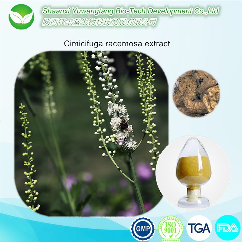 High Quality Natural Cimicifuga Racemosa Extract