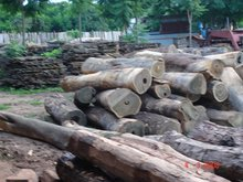 Santo. . Quina. Lumber And Logs