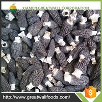 Manufacturer Supply dried morel mushrooms china