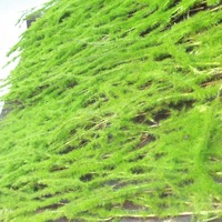 2016 high quality wholesale green artificial carpet artificial decorative moss