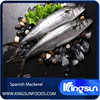 Hot Sale Fresh IQF Spanish Mackerel Fish