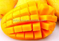 hot sale high quality mango distributors
