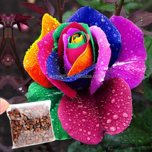 500Pcs Rose Seeds,Rainbow Petal Plants,Home Garden Flowers