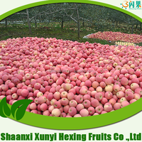New Sweet Fresh chinese Fuji Apple Fruit Specification Export