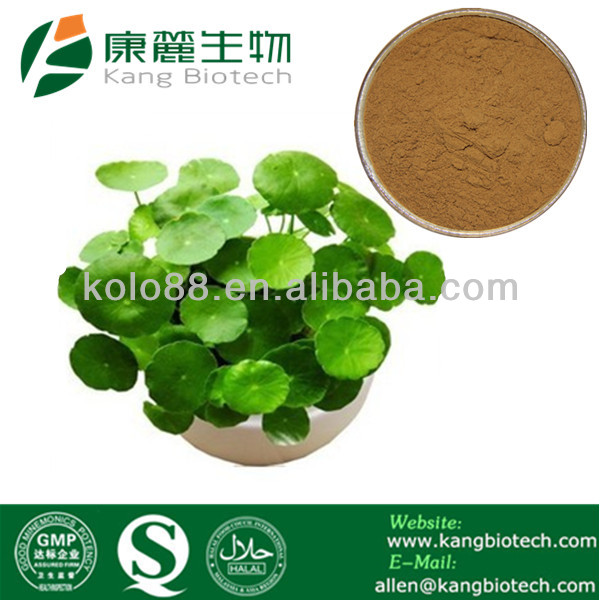 Factory Supply Asiaticoside&Madecassoside gotu kola extract fine powder