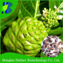 High sprouting rate noni seeds for growing
